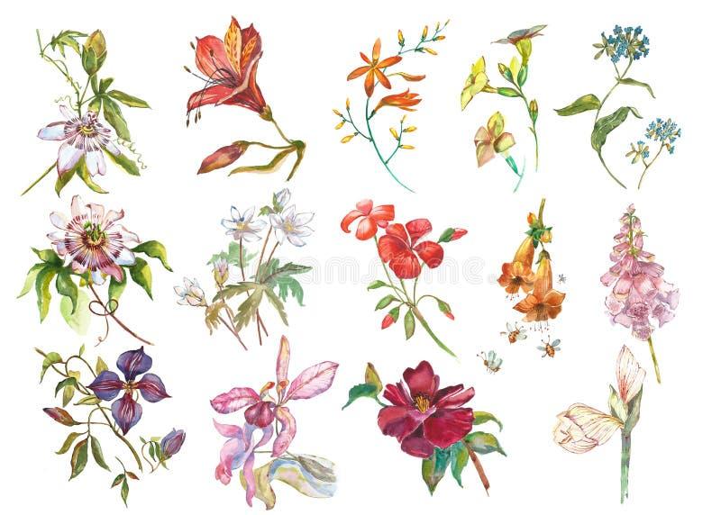 Große Satz-Aquarellsammlung mit Betriebselementen - Blatt, Blumen Botanische Illustration lokalisiert auf weißem Hintergrund stock abbildung