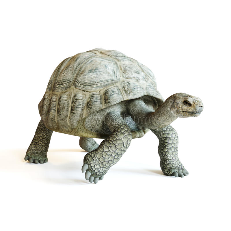 Große Schildkröte, die auf einen lokalisierten weißen Hintergrund geht Wiedergabe 3d lizenzfreie abbildung