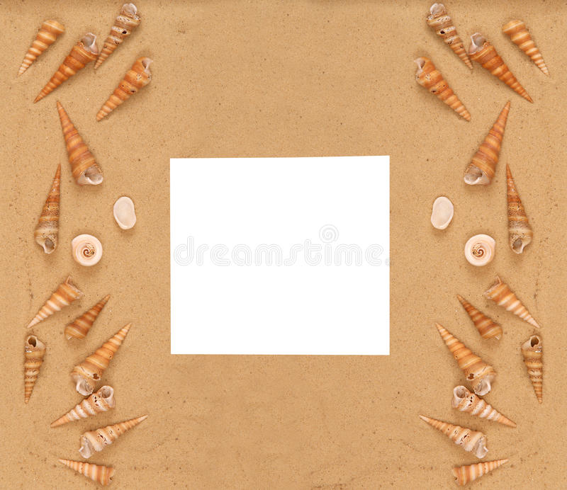 Große Seashells auf dem Sand lizenzfreies stockbild
