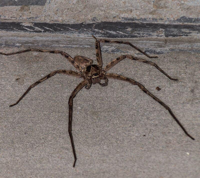 Große Spinne stockfotos