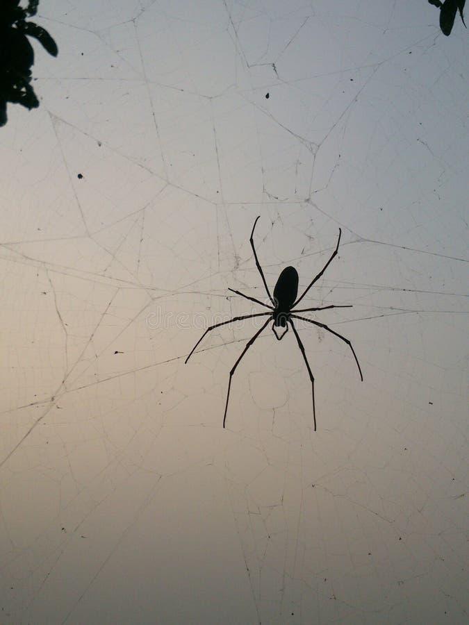 Große Spinne lizenzfreie stockbilder