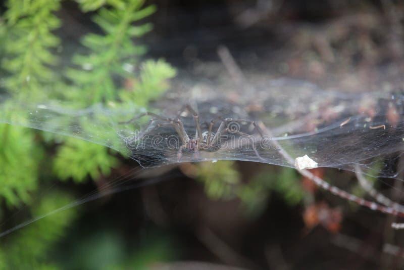 Große Spinne auf seinem Netz stockfoto