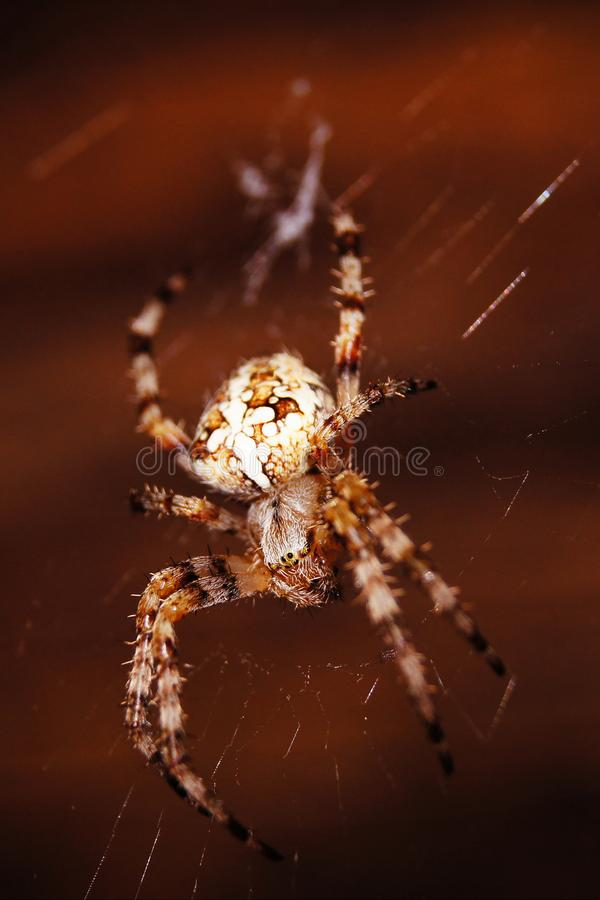 Gro?e Spinne nahe meinem Haus stockfotos