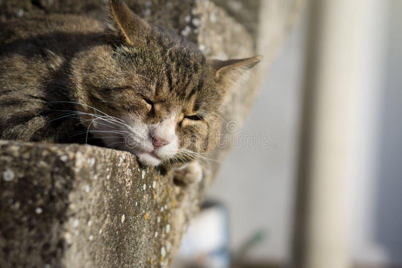 Große Tigerbraunkatze, die auf der Treppe schläft Die Katze ist sonnig stockfotos