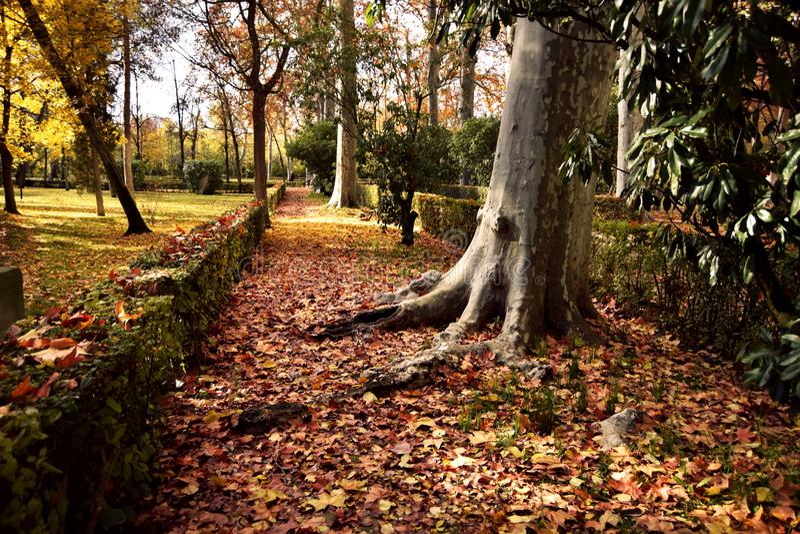 gro?e Wurzeln im Park im Herbst stockfoto