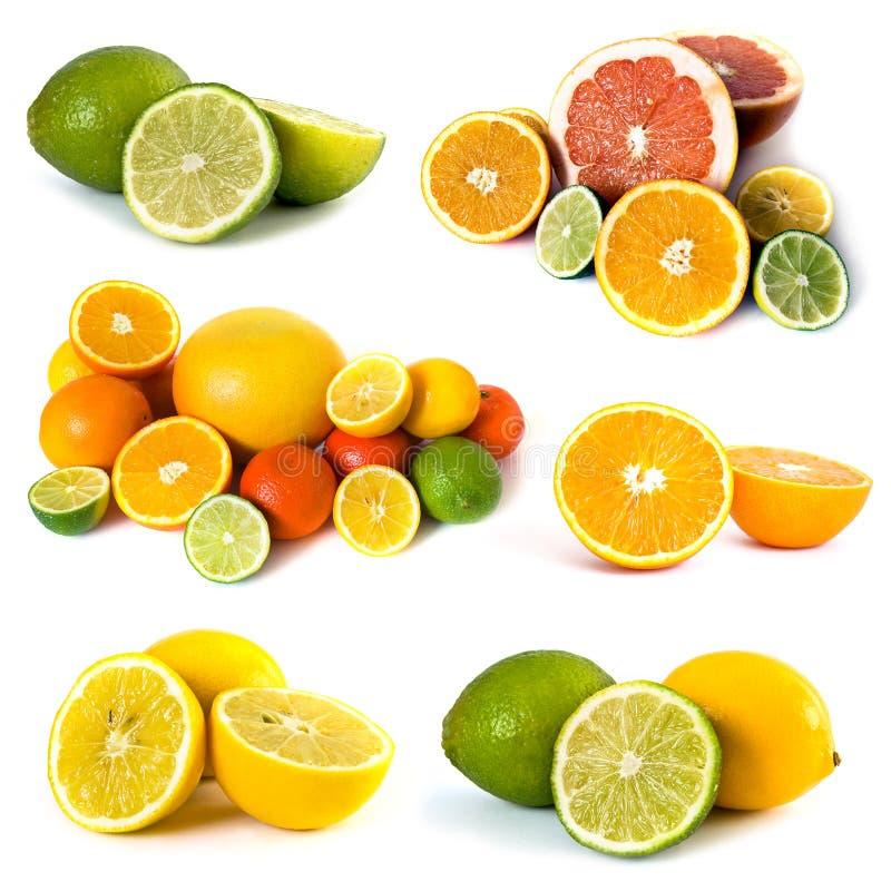 Große Zusammenstellung der Zitrusfrucht stockbild
