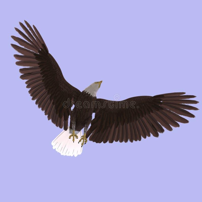 Großer Adler lizenzfreie abbildung