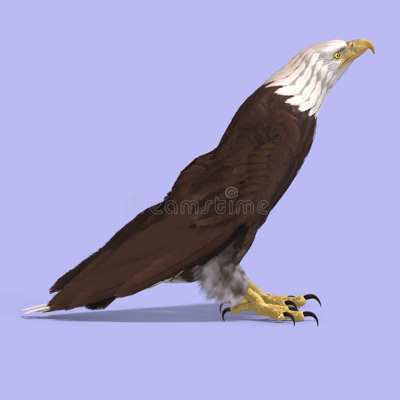 Großer Adler vektor abbildung
