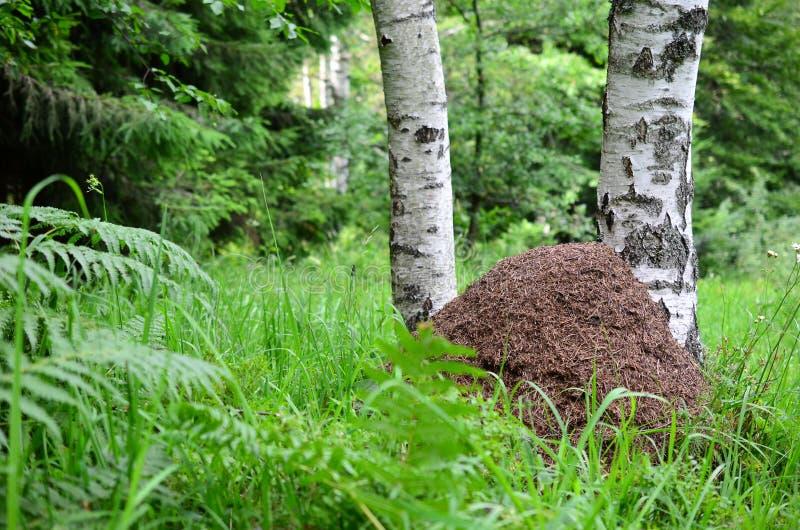 Großer Ameisenhügel stockfotos