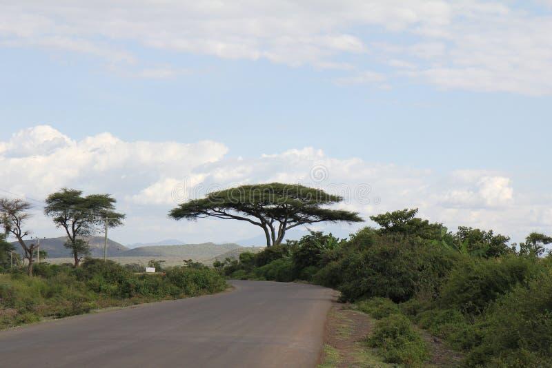Großer Baum in Äthiopien lizenzfreies stockbild