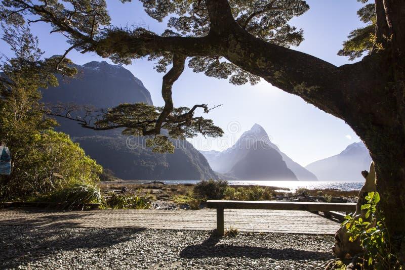 Großer Baum auf der Seebank stockbild
