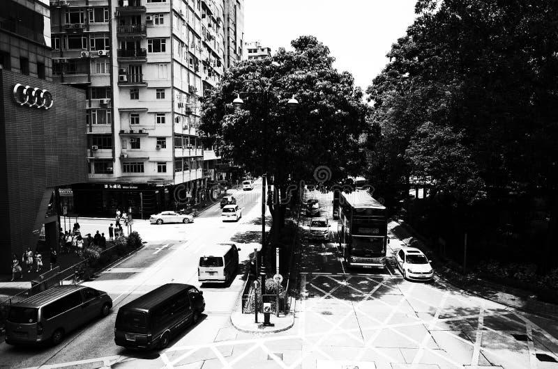 Großer Baum in der Kreuzung stockfotos