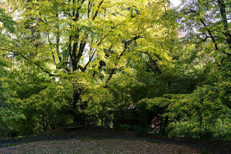 Großer Baum in der Vorderansicht des Parks mit Tageslicht lizenzfreie stockfotografie