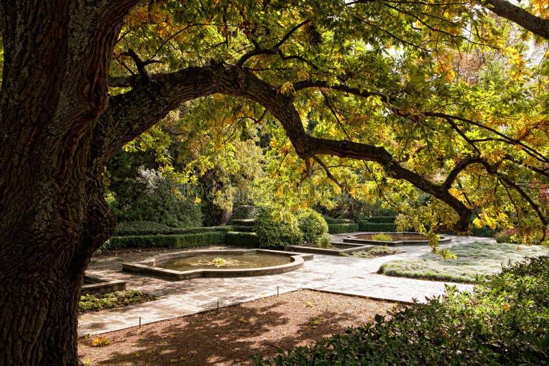 Großer Baum im Herbstpark lizenzfreie stockbilder