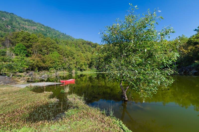 Großer Baum im See mit rotem Boot lizenzfreie stockfotos