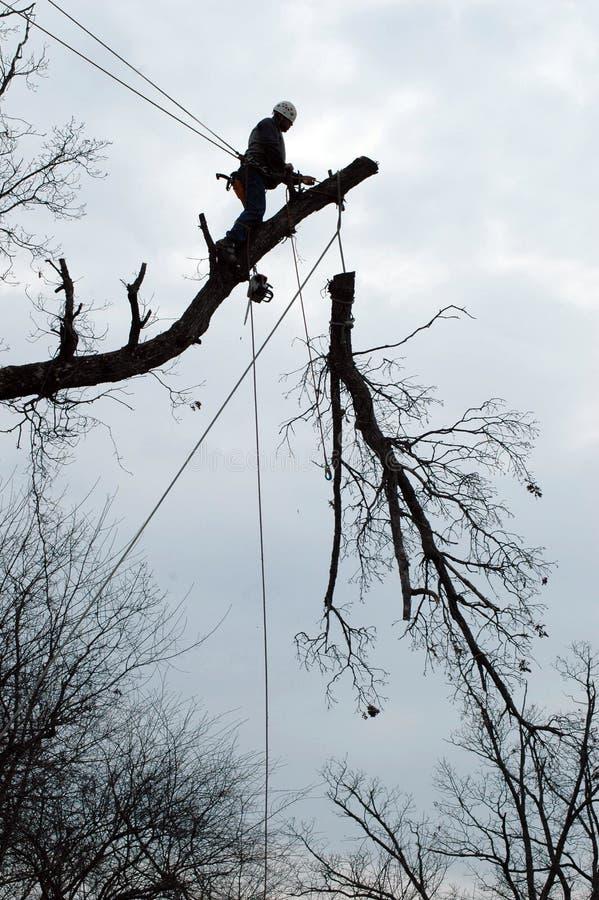 Großer Baum nehmen herunter stockfotos