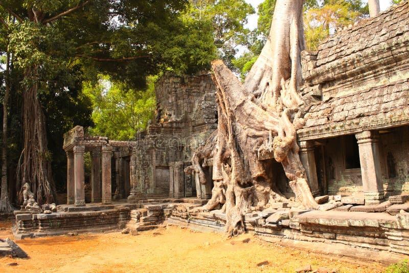 Großer Baum und Ruinen des Tempels in Angkor Wat Komplex, Siem Reap, C lizenzfreies stockfoto