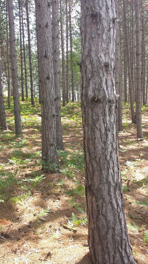 Großer Baum, wenig Baum lizenzfreies stockbild
