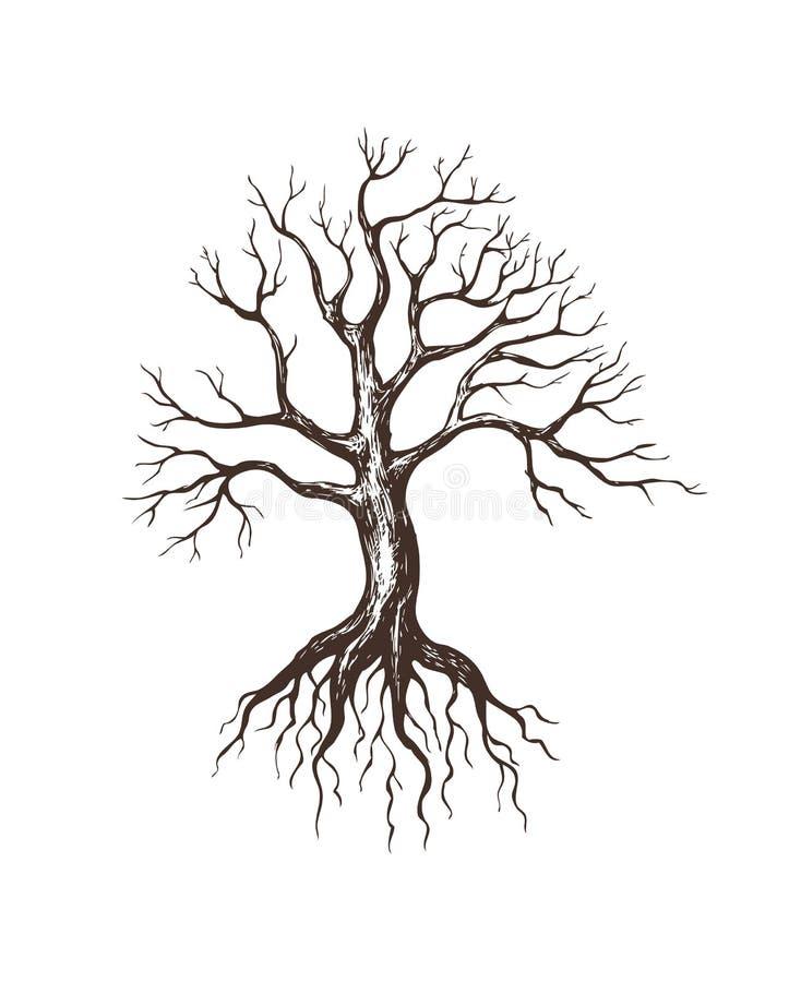 Großer blattloser Baum lizenzfreies stockbild