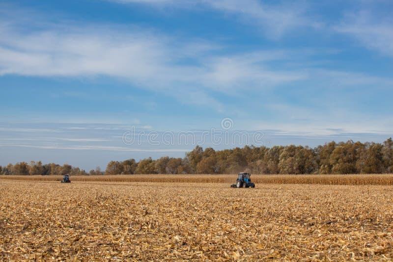 Großer blauer Traktor zwei, der den Boden pflügt, nachdem Maisernte auf einem sonnigen geerntet worden ist, klar, Herbsttag stockbild