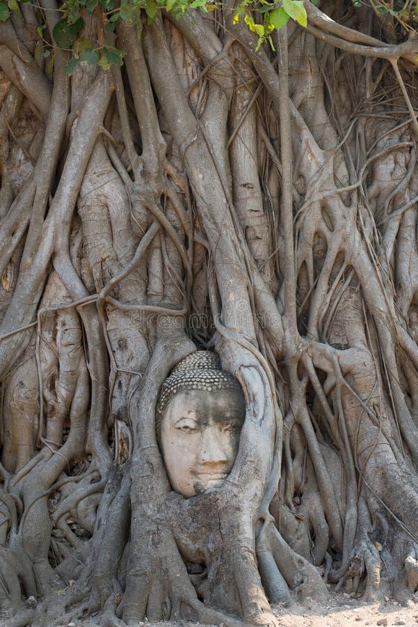 Großer Buddha betten im Baum ein stockbild