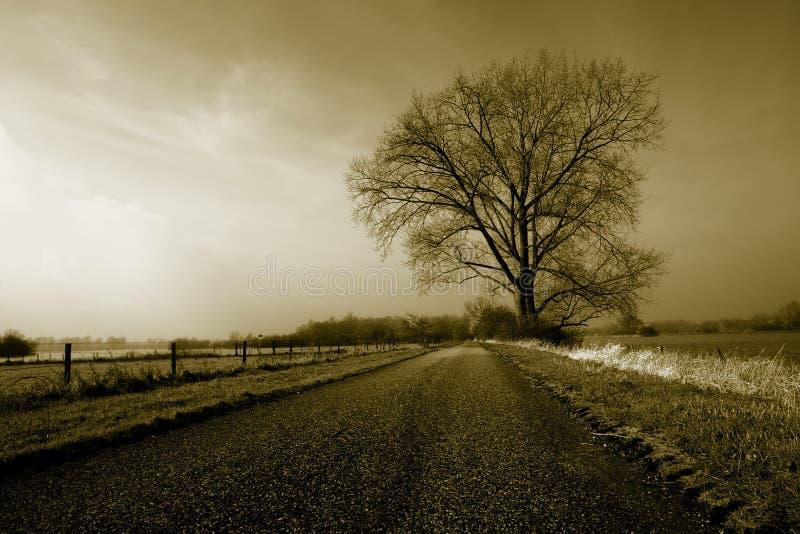 Großer einsamer Baum stockbilder