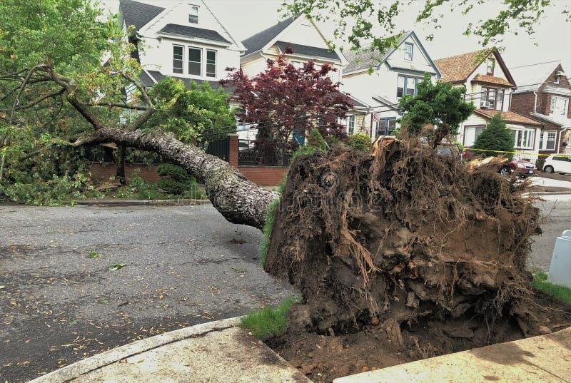 Großer gefallener Baum mit Wurzeln nach Sturm lizenzfreie stockfotografie
