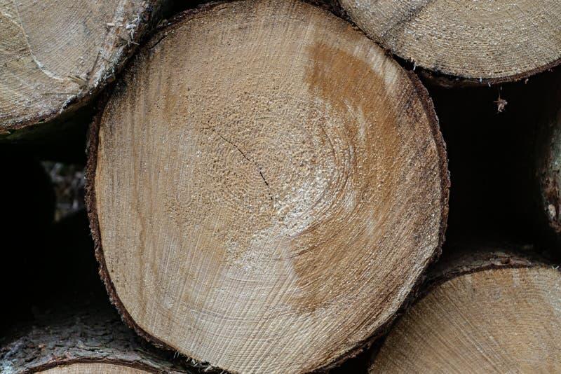 Großer gesägter Klotz Natürlicher hölzerner Dekorhintergrund stockfoto