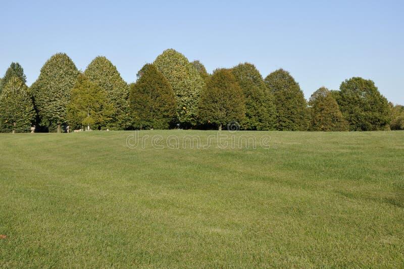 Großer Grasbereich mit Reihe der Bäume lizenzfreie stockfotos