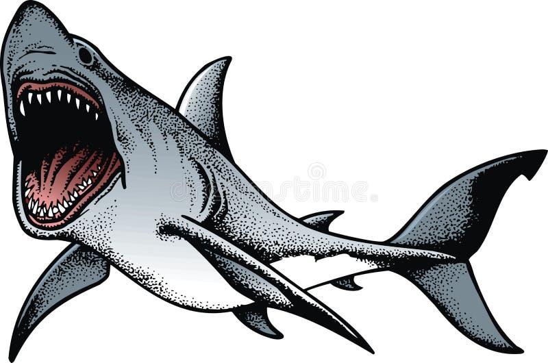 Großer Haifisch lokalisiert stock abbildung