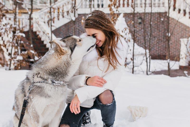 Großer Hund, der das Gesicht des Mädchens während des Winterwegs leckt Foto im Freien der entzückenden brunette Frau, die Zeit mi lizenzfreies stockbild