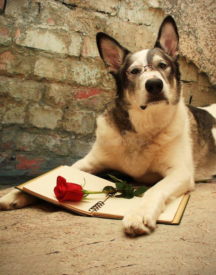 Großer Hund, der an Liebe liest und denkt stockbilder