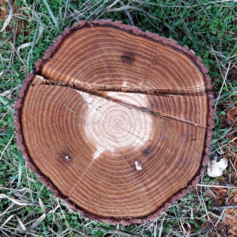 Großer Kreisstück holz-Querschnitt mit Baumring-Beschaffenheitsmuster stockfotografie