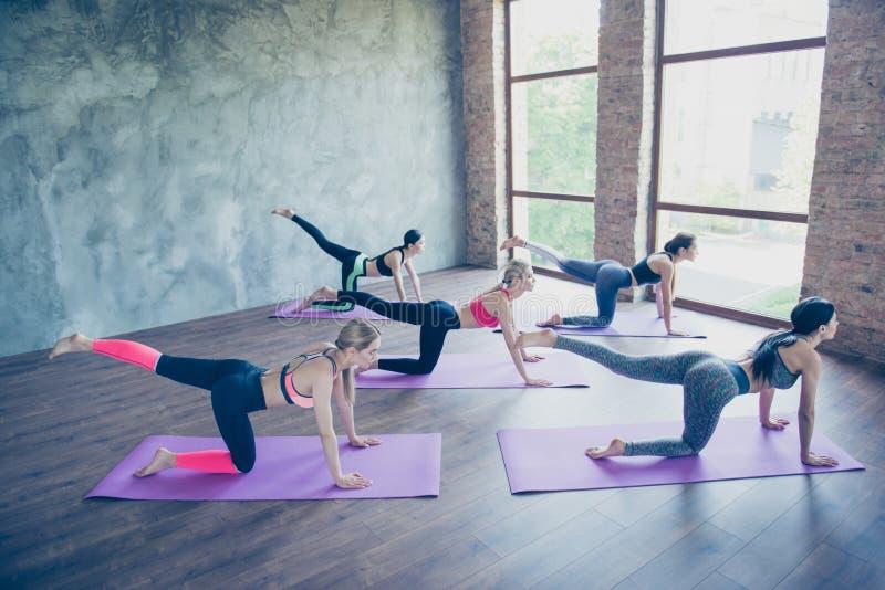 Großer Morgen Fünf junge Sportfrauen dehnen in modernes Studio auf purpurroten Matten aus Freiheit, Stille, Harmonie und entspann stockbild