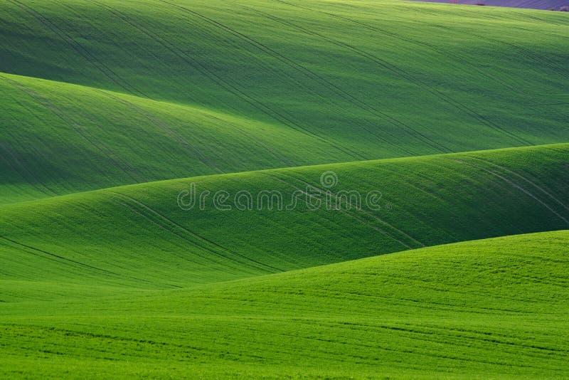 Großer natürlicher grüner Hintergrund Frühling, der grüne Hügel mit Feldern des Weizens rollt Erstaunliche Fee Minimalistic-Frühl stockfotografie