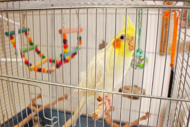 Großer Papagei Corella in einem Käfig stockbilder