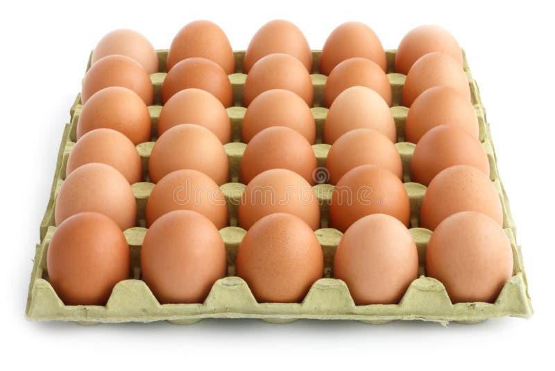 Großer quadratischer Behälter von Eiern lizenzfreie stockbilder