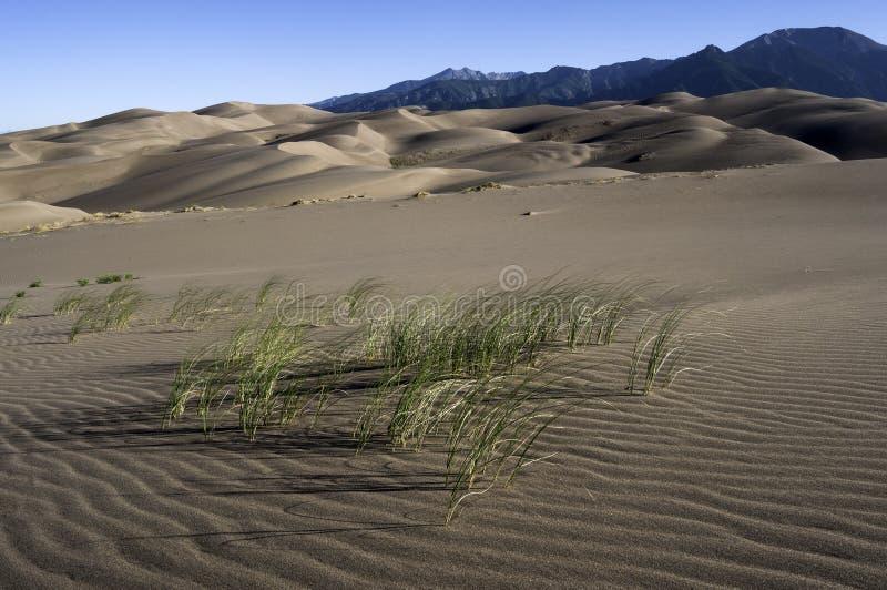 Großer Sanddüne-Nationalpark in Süd-Colorado stockbild