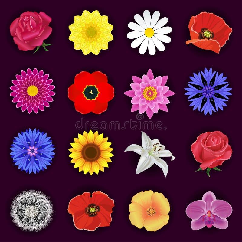 Großer Satz Frühlings- oder Sommerblumen lokalisiert vektor abbildung