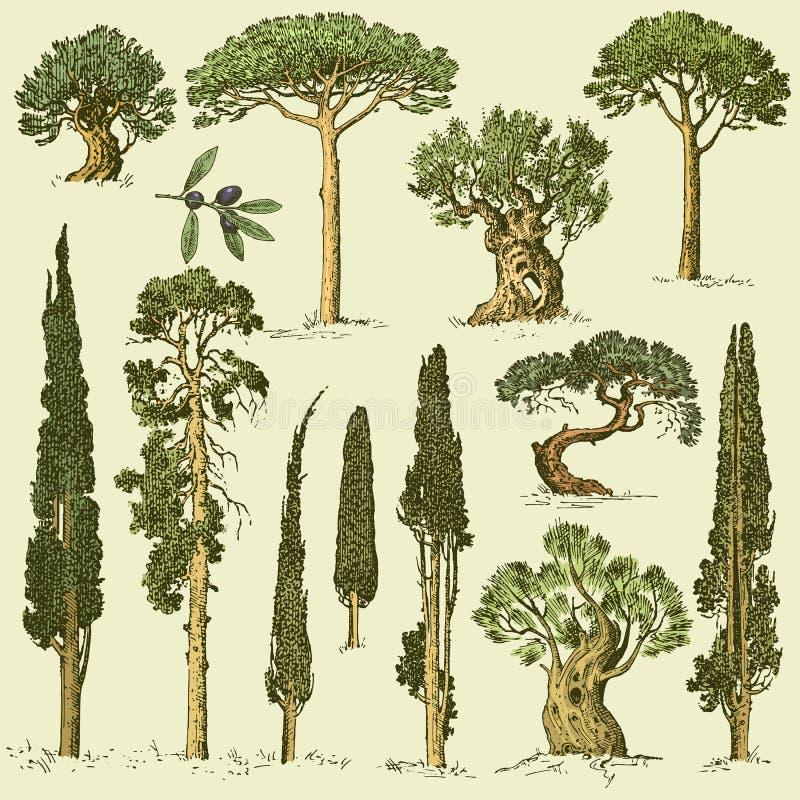 Großer Satz Von Graviert, Hand Gezeichnete Bäume Umfassen Kiefer ...
