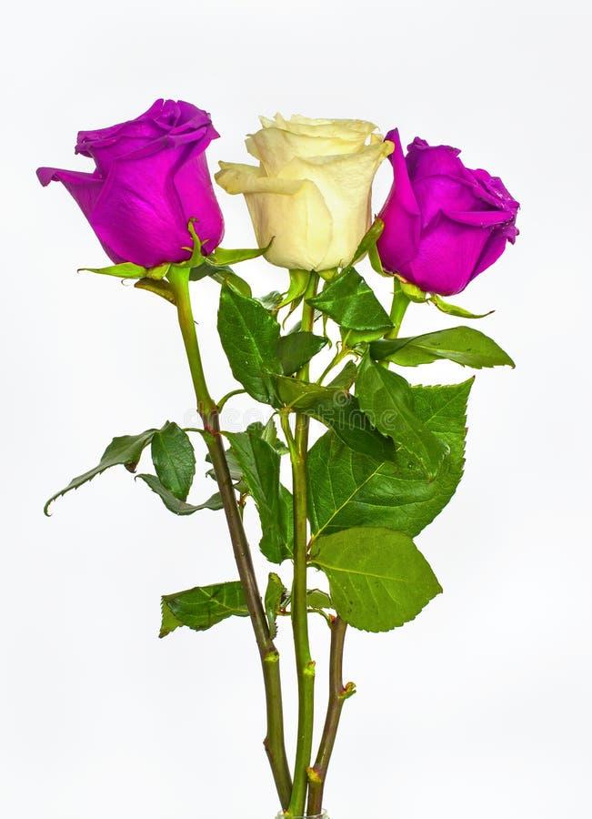 Großer Schöner Blumenstrauß Von Rosen, Von Roten Blauen Weißen Und ...