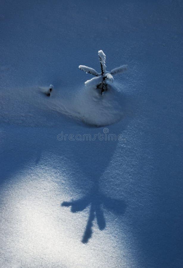 Großer Schatten eines kleinen Baums auf dem Schnee stockfoto