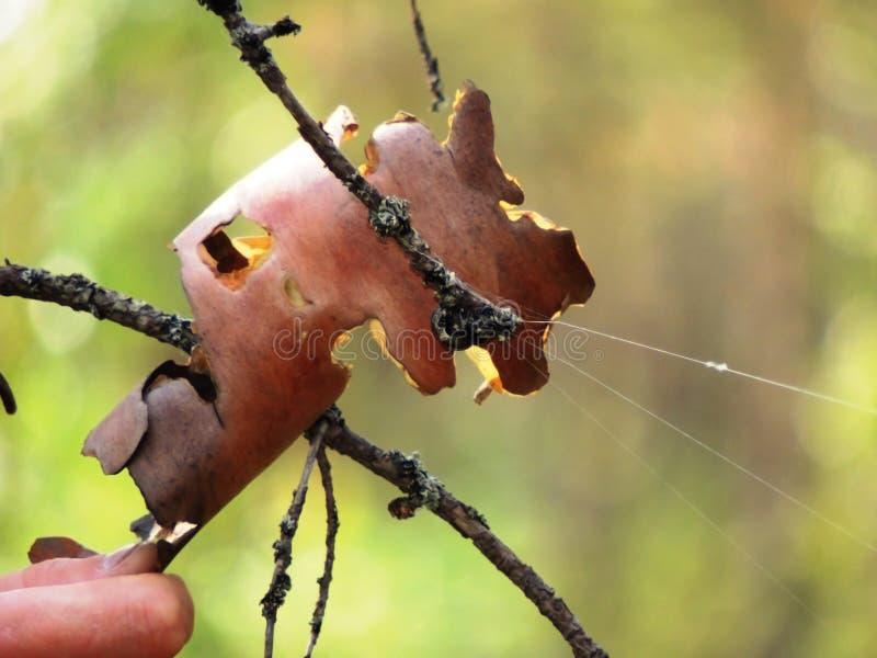 Großer Spinnenschlaf lizenzfreie stockfotografie