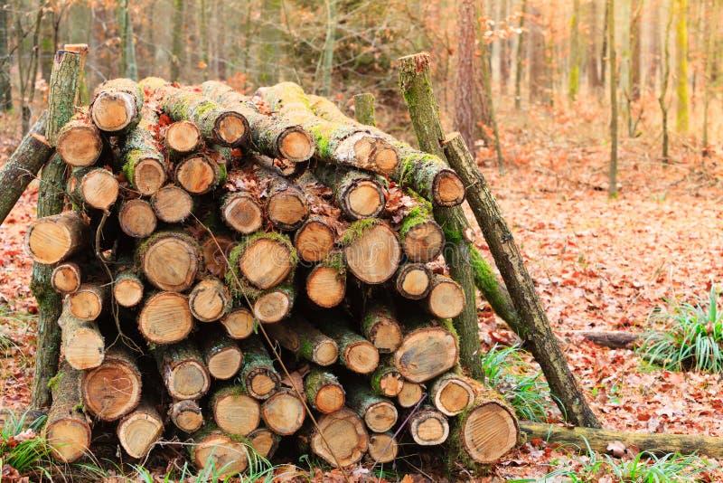 Großer Stapel des Holzes im Herbstwald lizenzfreies stockbild