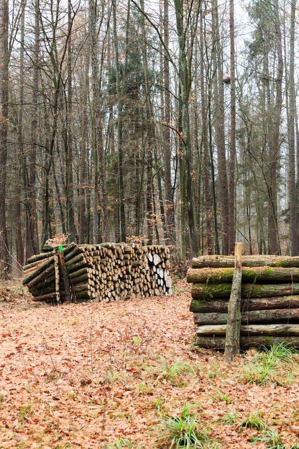 Großer Stapel des Holzes im Herbstwald lizenzfreie stockfotos