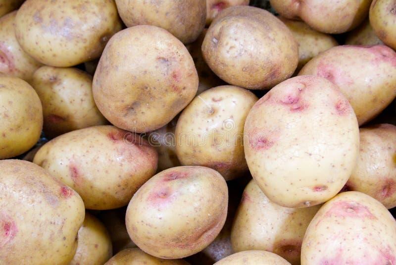 Großer Stapel von backenden Kartoffeln für Verkauf an den Lebensmittelhändlern stockfotos