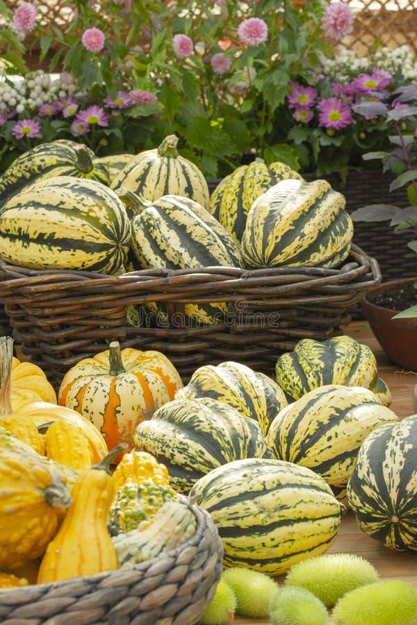 Großer Stapel von grünen gestreiften Kürbisen an einem Landwirtmarkt, Gemüseherbsterntefest stockfotografie