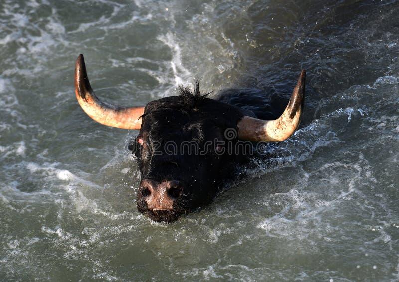 Großer Stier im spanischen Meer lizenzfreie stockfotografie
