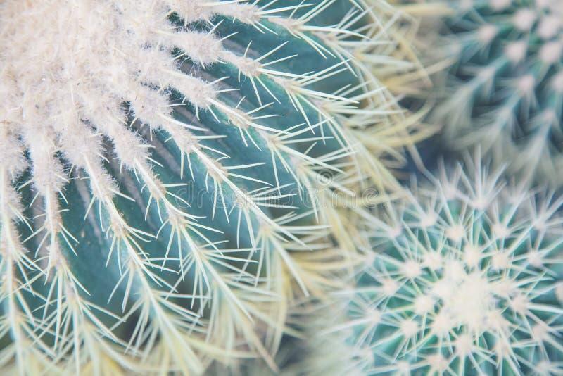 Großer und kleiner grüner Kaktus, Ansicht von oben stockfotografie