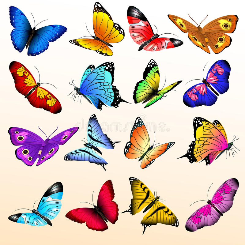 Großer Vektorsatz der bunten realistischen Schmetterlinge vektor abbildung